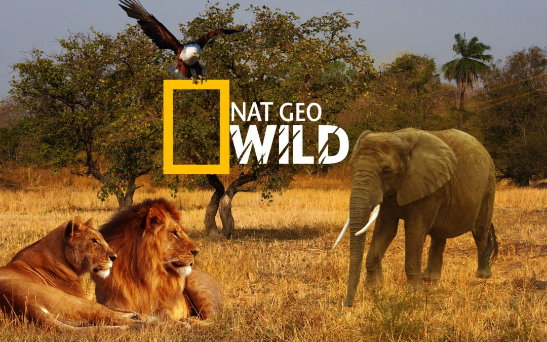 Nat Geo Wild zender van de maand januari bij SKV. Win een reis naar Zuid-Afrika!