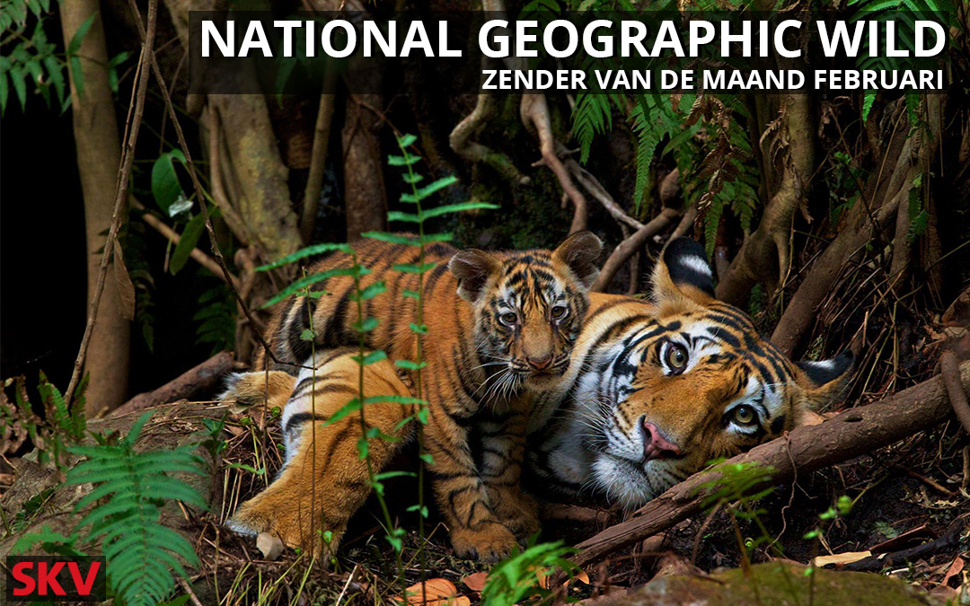National Geographic Wild zender van de maand februari 2021 op kanaal 999